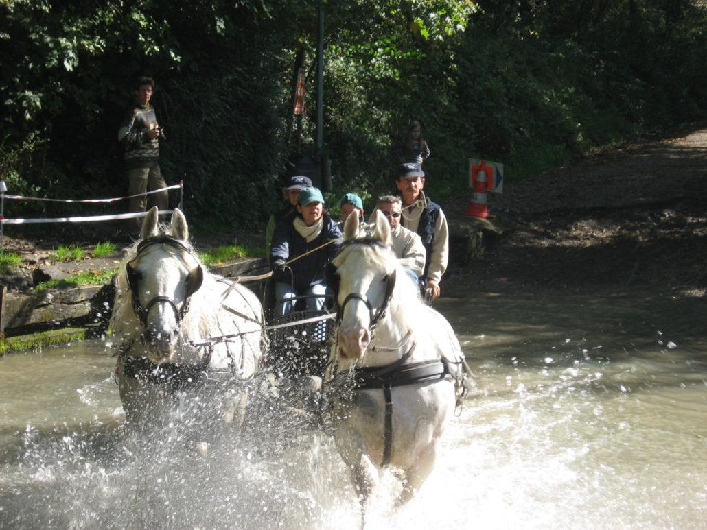 Rallye Equestre 115